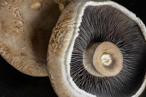 Shopping advice for choosing the perfect mushroom from yourallergychefs.com